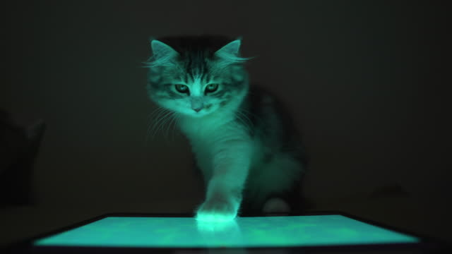 kitten cat playing tablet in night time - leisure games stock videos & royalty-free footage