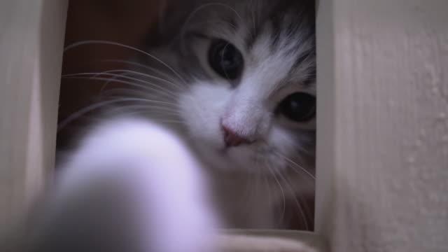 Kätzchen Katze spielen mit Kamera