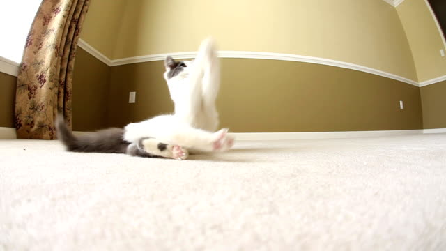 kitten chasing toy mouse on a string - mixed breed cat stock videos & royalty-free footage