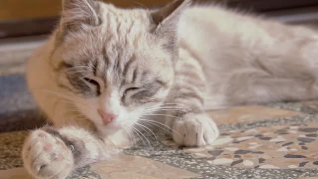 Kitten cleaning Itself
