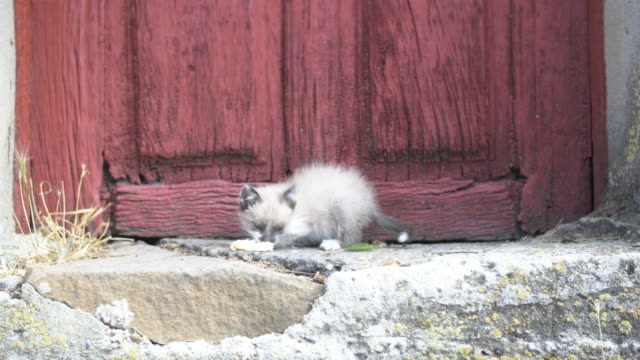 Kitten eating near a red door