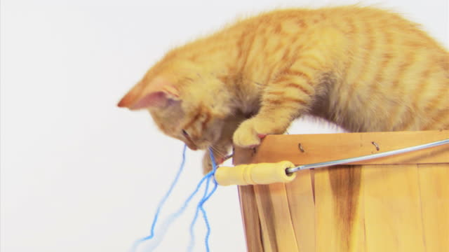 Kitten in basket playing with yarn
