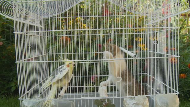 hd :キトンのパロッツ鳥篭 - 雑種のネコ点の映像素材/bロール