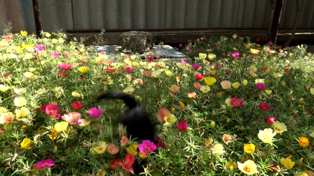 Kitten jumping on a flower bed