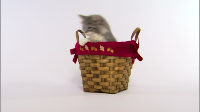 Kitten jumping out of basket