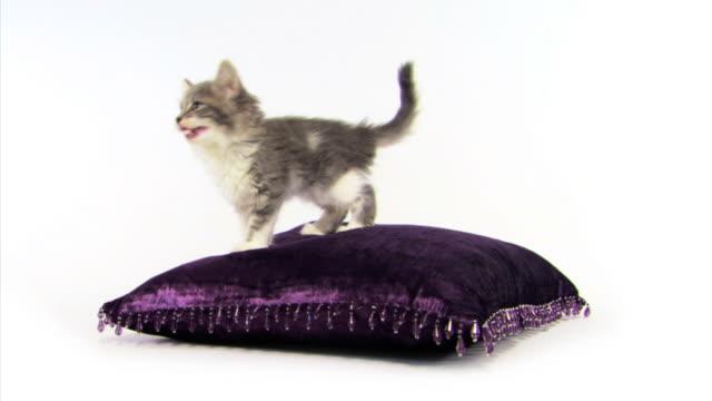 Kitten on pillow
