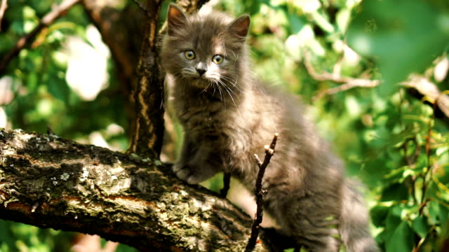 kitten on the branch - albero video stock e b–roll