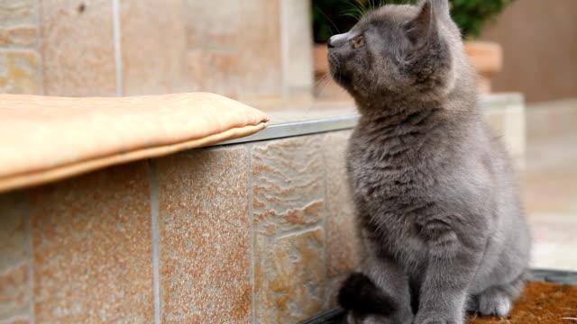 MS Filhote de Gato no Terraço