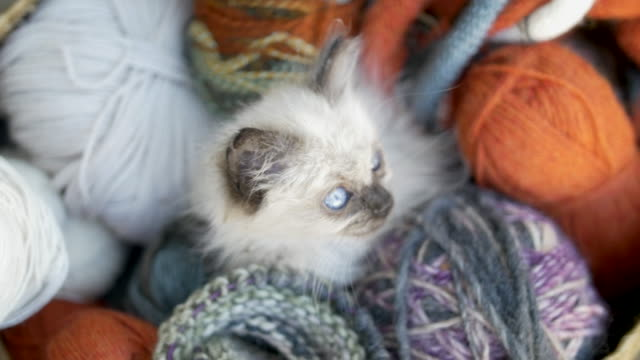 kitten over a knitting wool basket - 20 seconds or greater stock videos & royalty-free footage