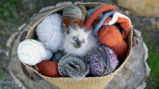 kitten over a knitting wool basket