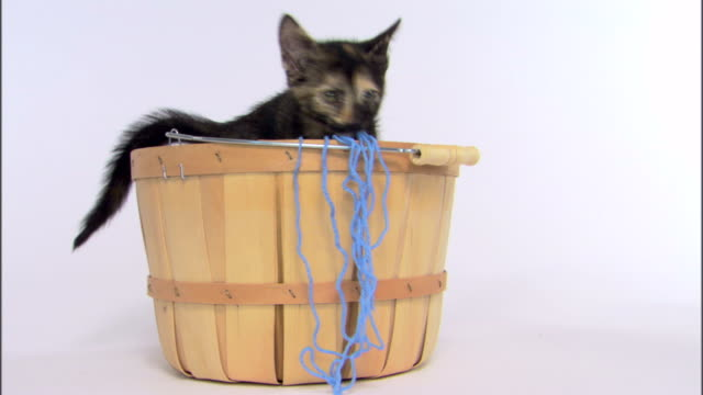 kitten playing in basket - ball of wool stock videos and b-roll footage