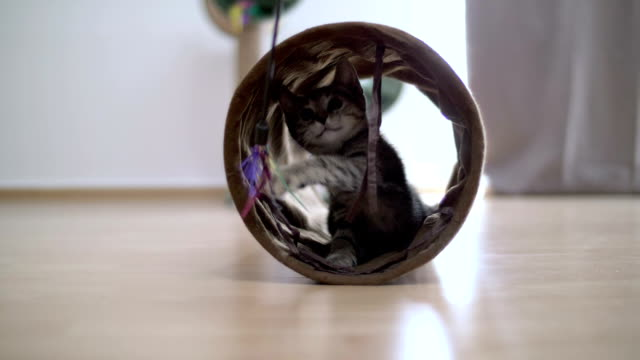 Kitten playing in tunnel with a toy in slow motion