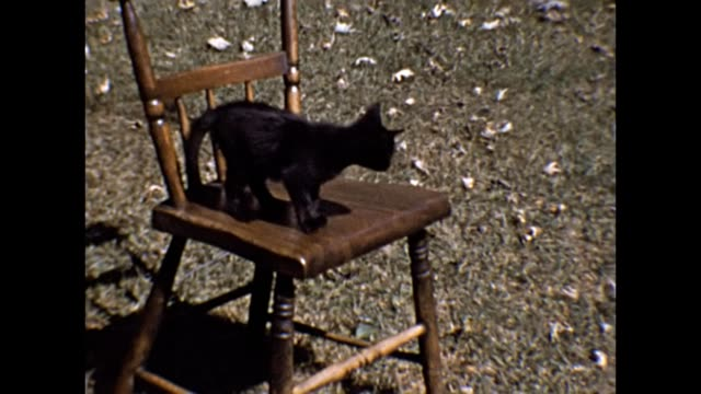 1953 Kitten Playing on a Chair