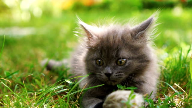kitten playing on the grass - cute stock videos & royalty-free footage