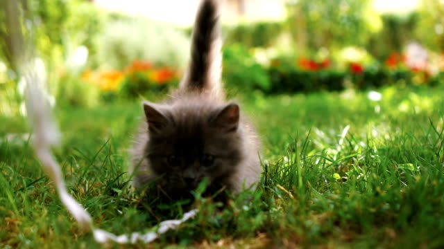 Kitten playing on the grass