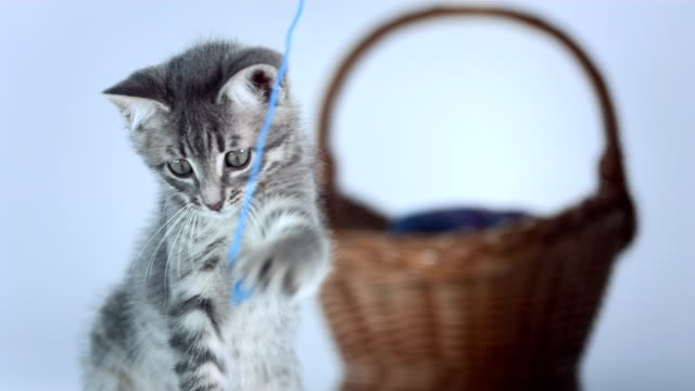 hd: kitten playing with a thread - thread stock videos & royalty-free footage