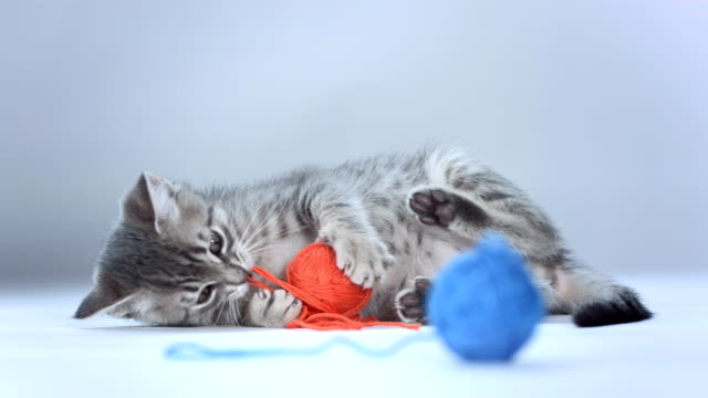 stockvideo's en b-roll-footage met hd: kitten playing with ball of wool - wollig