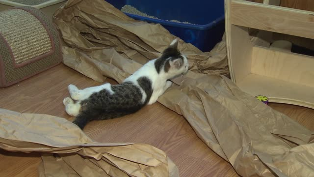 wgn kitten playing with tissue paper on december 06 2013 in chicago illinois - tissue paper stock videos and b-roll footage