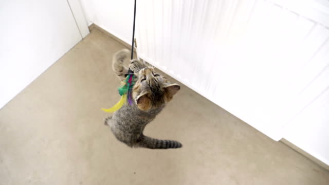 Kitten playing with toy in slow motion