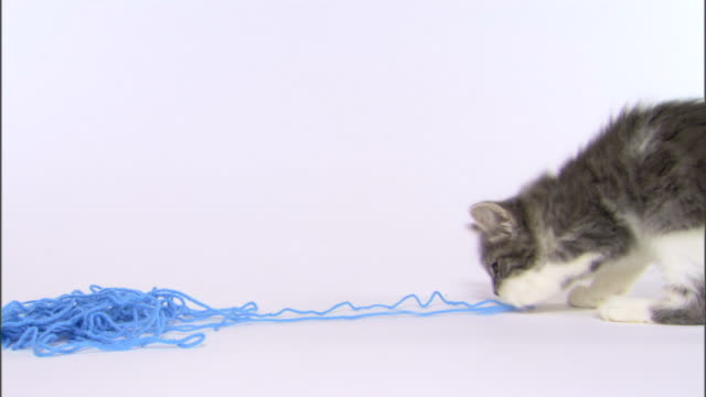 kitten playing with yarn - ball of wool stock videos & royalty-free footage