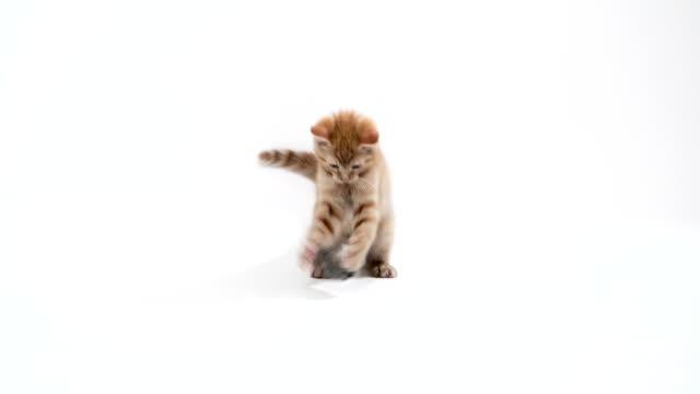 Kitten plays in studio in slow motion