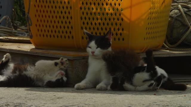 vídeos y material grabado en eventos de stock de kitten plays with feral domestic cat by crate in fishing port - colonia grupo de animales