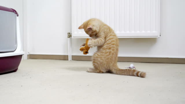 kitten plays with toy in slow motion - 30 sekunden oder länger stock-videos und b-roll-filmmaterial