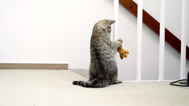 Kitten plays with toy in slow motion