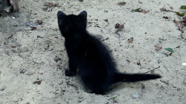 サンド ボックスでうんち子猫 - digging点の映像素材/bロール