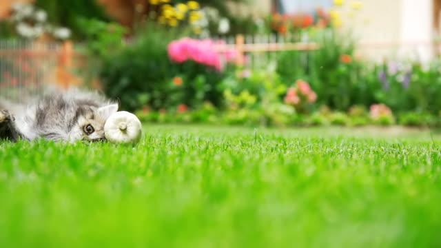 - SUPER ZEITLUPE, HD: Katzenjunges Running Nach einem Spielzeug