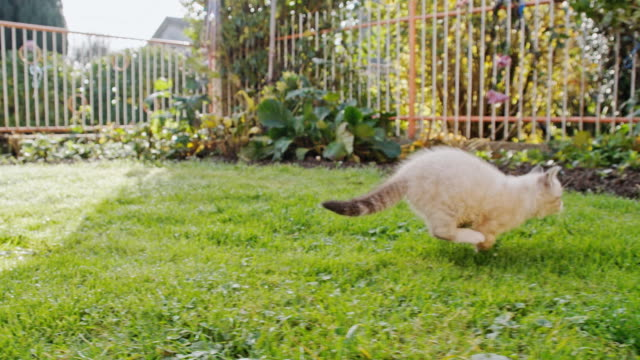 slo mo kitten running in the backyard - curiosity stock videos & royalty-free footage