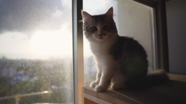 Kätzchen sitzen in der Nähe von Fenster bei Sonnenuntergang