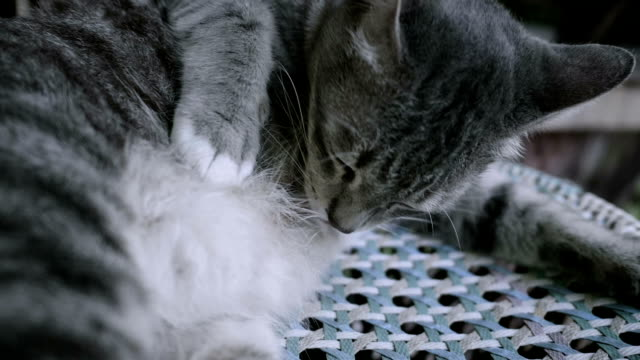 kitten sleeping and licking her paw - licking stock videos & royalty-free footage