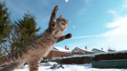 CLOSE UP: Kitten tries to catch a snowball in mid-air while playing in garden