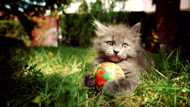 kitten with a ball - cute stock videos & royalty-free footage