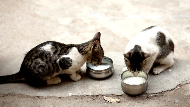 kittens drinking milk - bowl stock videos & royalty-free footage