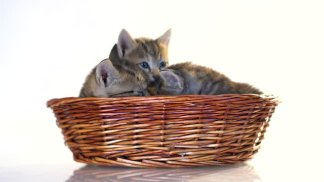 kätzchen in einem korb auf weißem hintergrund. - schachtel stock-videos und b-roll-filmmaterial