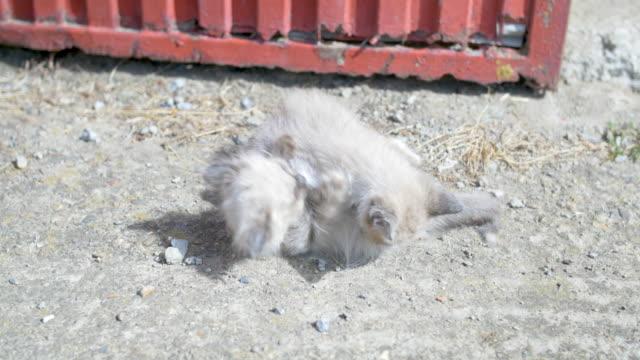 kittens playing and fighting - 2匹点の映像素材/bロール