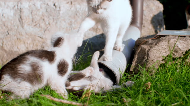 Kittens playing outdoors