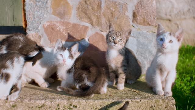 Kätzchen spielen im freien