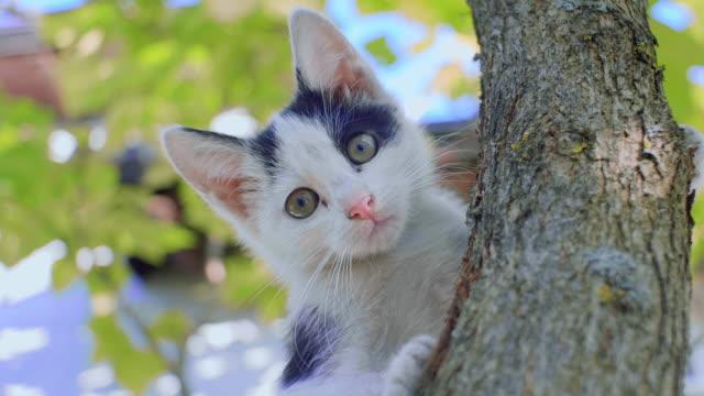 Kittens die buiten spelen