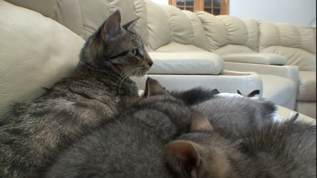 Kittens sleep with their mother, then startle as she rises.