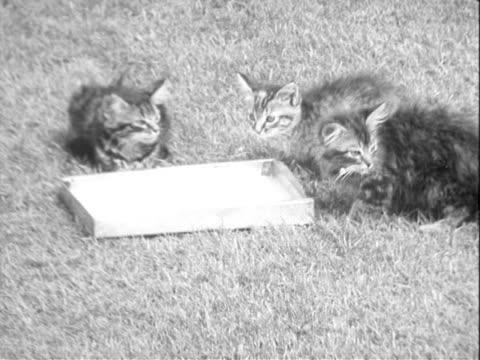 stockvideo's en b-roll-footage met kittens - meer dan 30 seconden