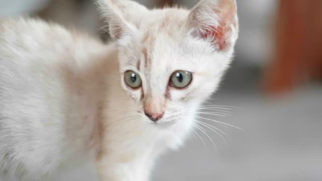 Kitty Kat auf dem Boden sitzen.
