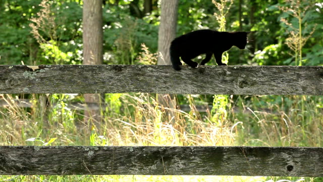kitty walking fence rail