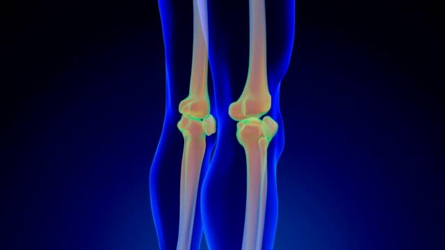 knie-anatomie - gliedmaßen körperteile stock-videos und b-roll-filmmaterial