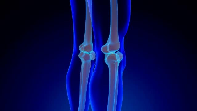 knee anatomy - cartilagine video stock e b–roll