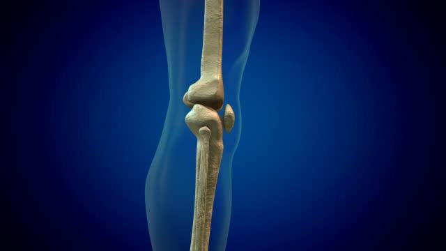knee human anatomy - tibia stock videos & royalty-free footage