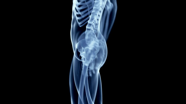 vídeos de stock, filmes e b-roll de knee pain - articulação humana termo anatômico