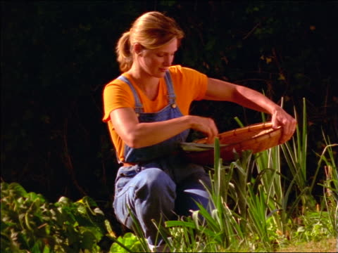 Kneeling blonde woman in overalls picking leeks from garden / France